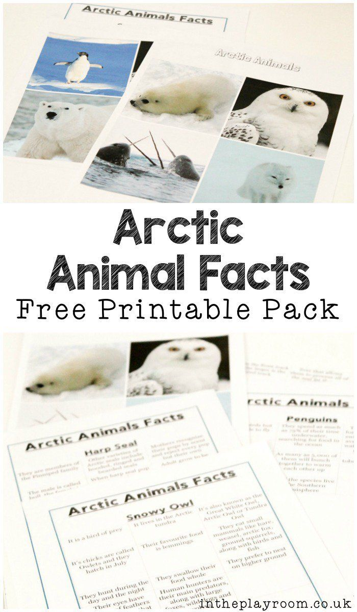 polar animals fact sheets and games to play with them polar