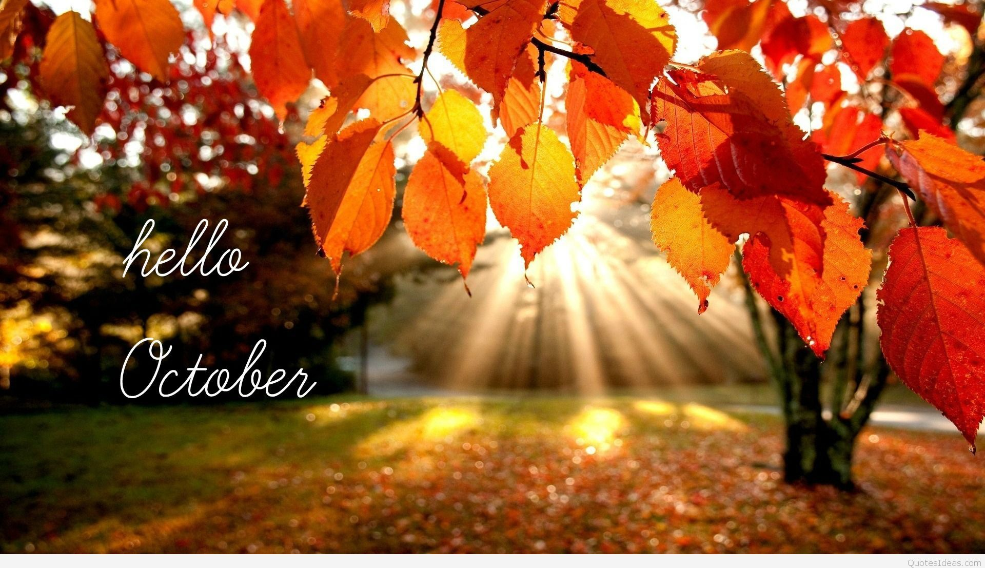 25 October Images ideas | october images, hello october, october
