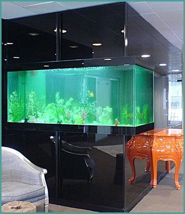custom homes and fishtanks custom built aquariums