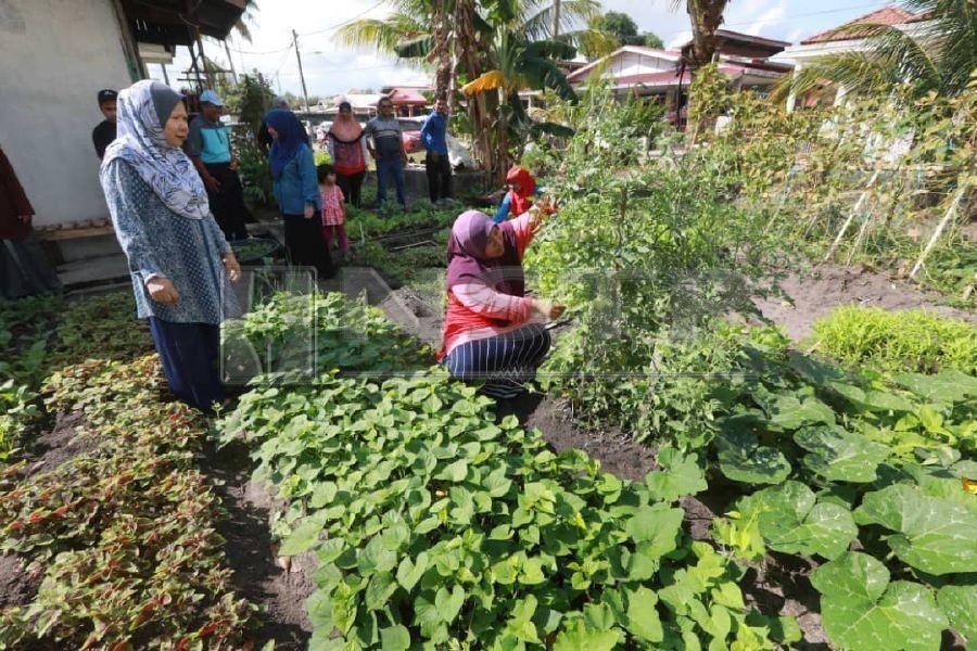 Reaping Dividends From Urban Farming Ipomoea Aquatica Farm