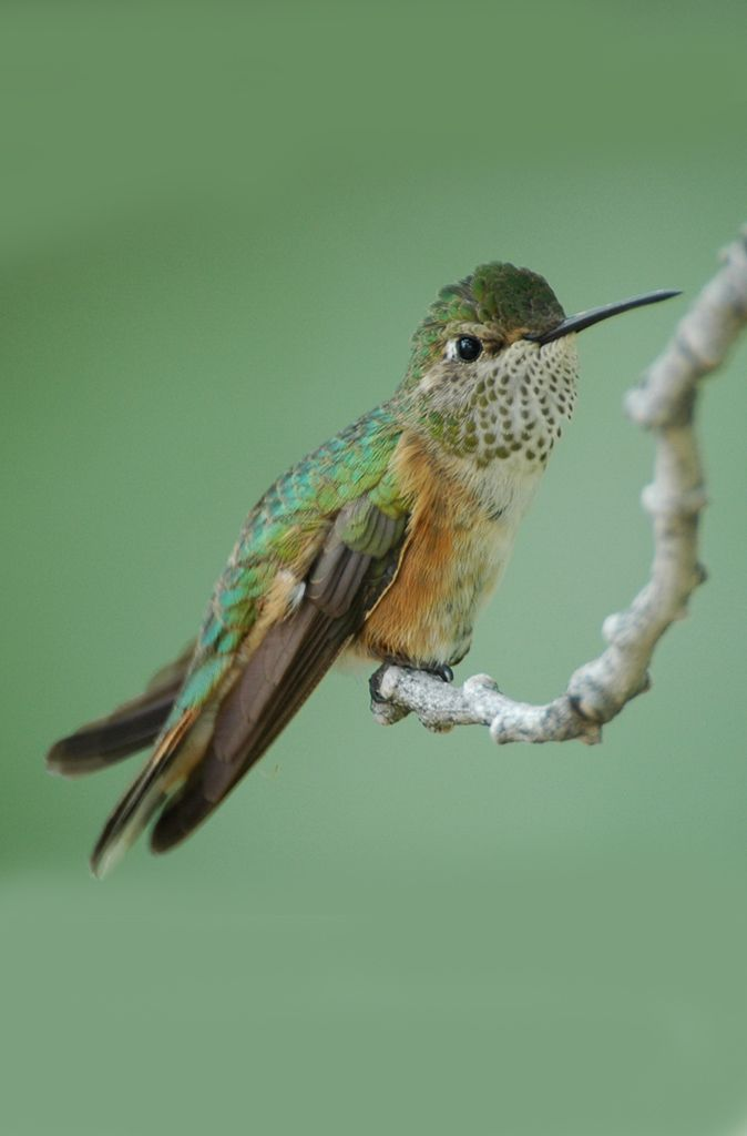 Bird Overlay Bird Photo Hummingbird Overlay 5 Hummingbird PNG