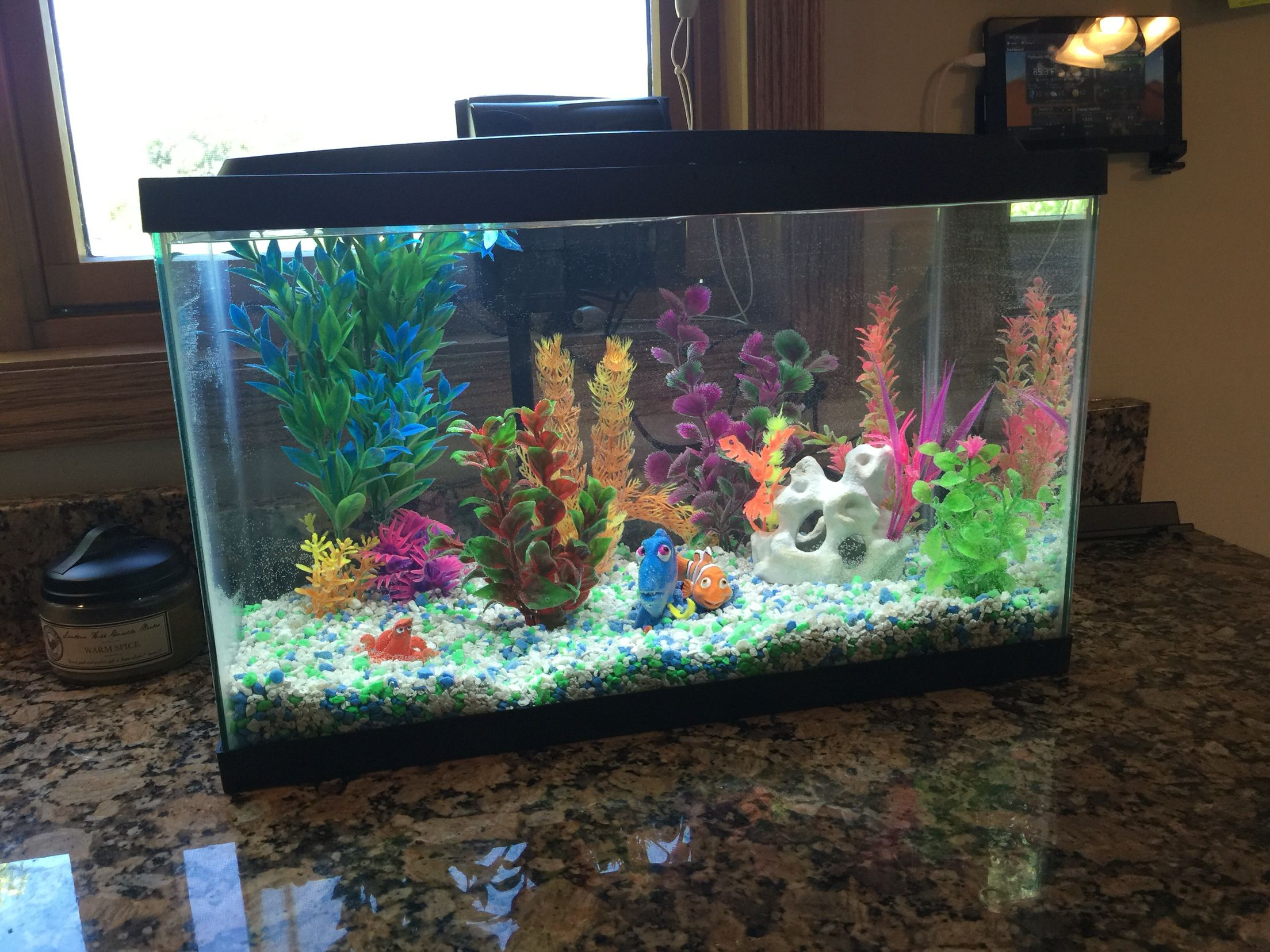 Neon Nemo and Dory kid fish tank aquarium set up colorful