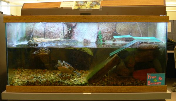 fish aquariums work great for aquatic pet turtles this is a setup