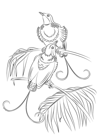 King Of Hollands Bird Of Paradise Coloring Page Supercoloring Com Bird Coloring Pages Coloring Pages Lion Coloring Pages