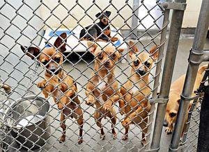 Free Adoptions May 30 31 At San Martin Animal Shelter Santa Clara