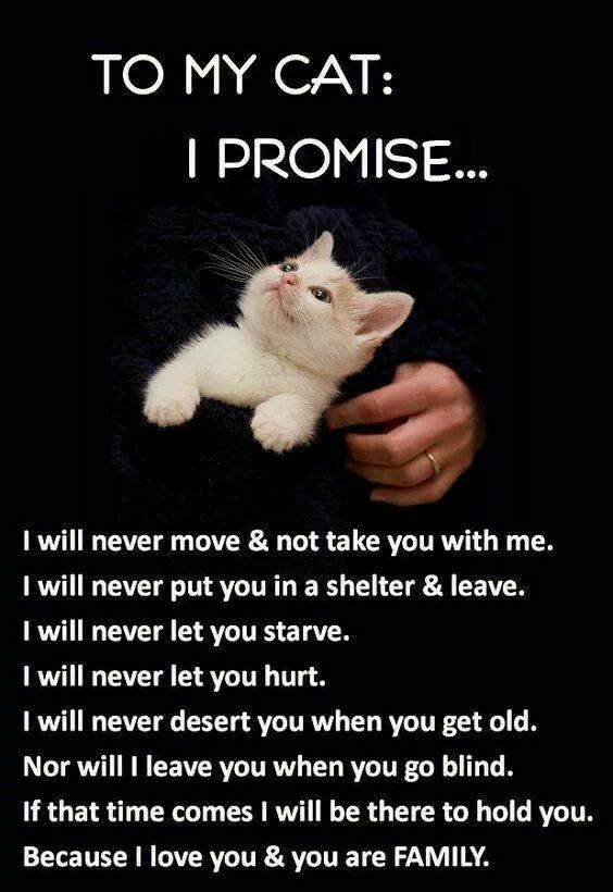 Don't abandon your cat. Don't adopt without thinking. Make sure you're ready for a forever commitment.