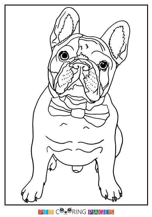 French Bulldog Coloring Page French Bulldog Bulldog Coloring Pages