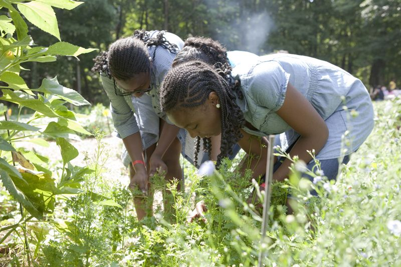 Working through the greenery at The Fresh Air Fund's camp