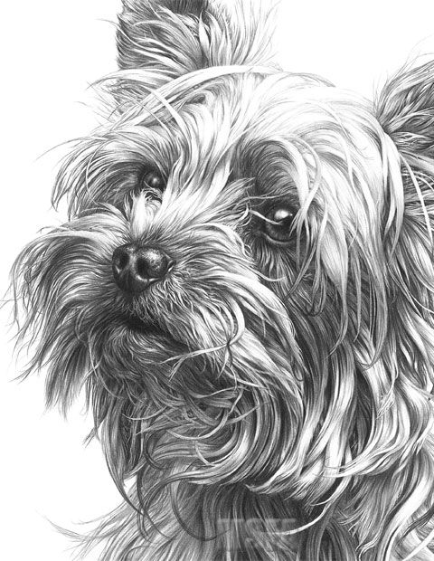 Pin By Candela Vallejos On Dibujos A Sombra Yorkie Painting Dog Paintings Dog Artwork