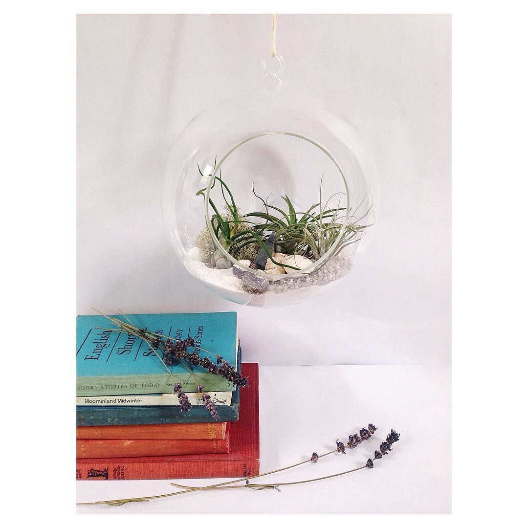 Last week I was asked to do a custom order of a large hanging globe with three air plants to suit quite a minimal contemporary interior. I'm so pleased with the results that I'll soon be featuring large hanging globe terrariums in the shop as a regular listing!