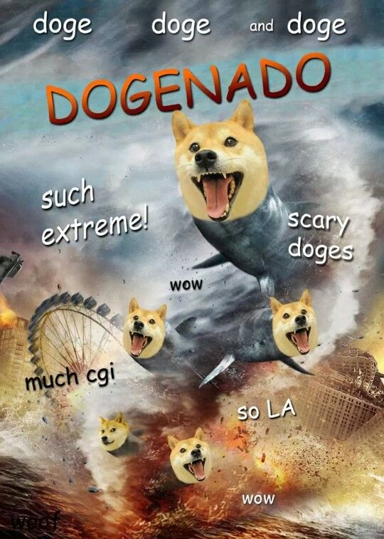Pin By Joshua Everts On Doge Funny Doge Funny Memes Doge