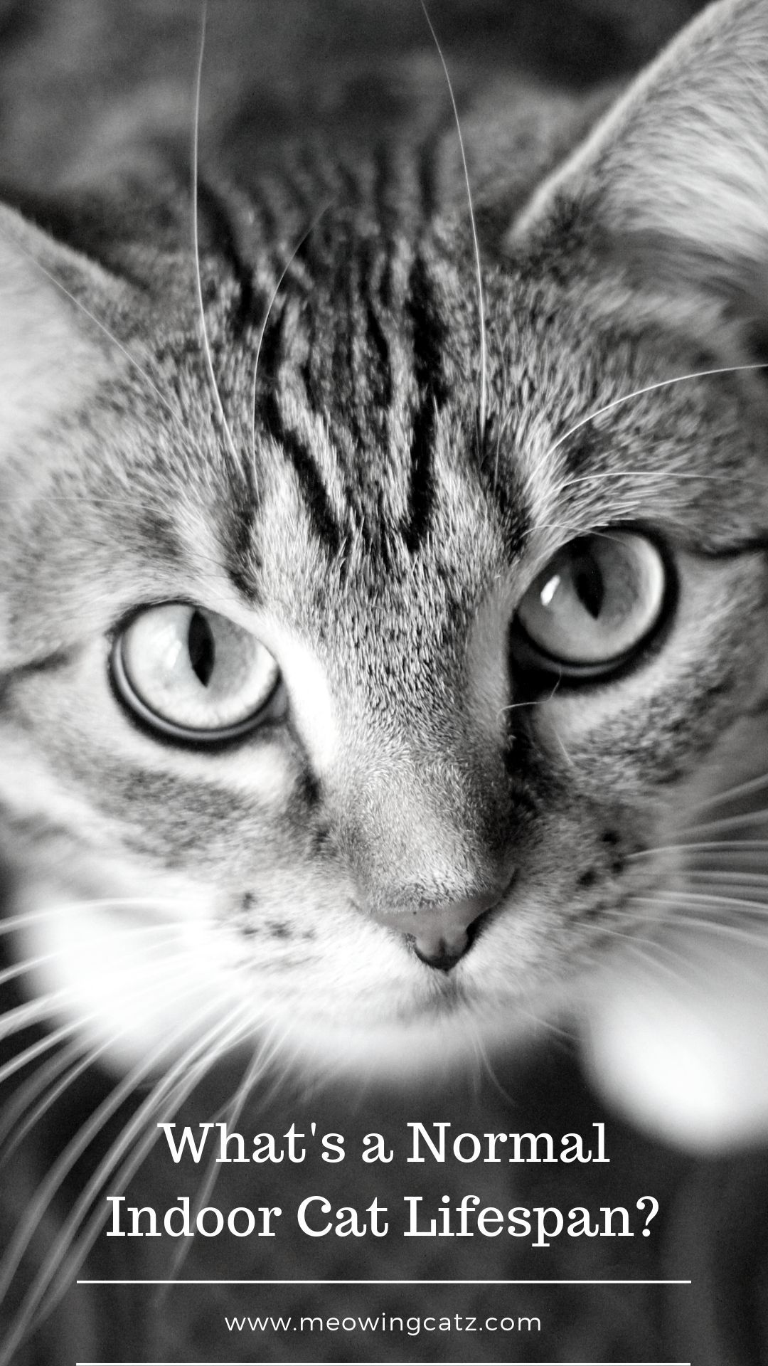 Pin On Best Tips For Indoor Cats Owners