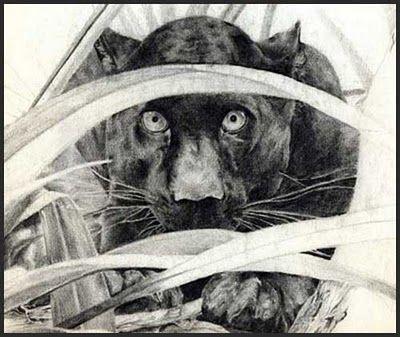 Ejemplo de Dibujo Naturalista