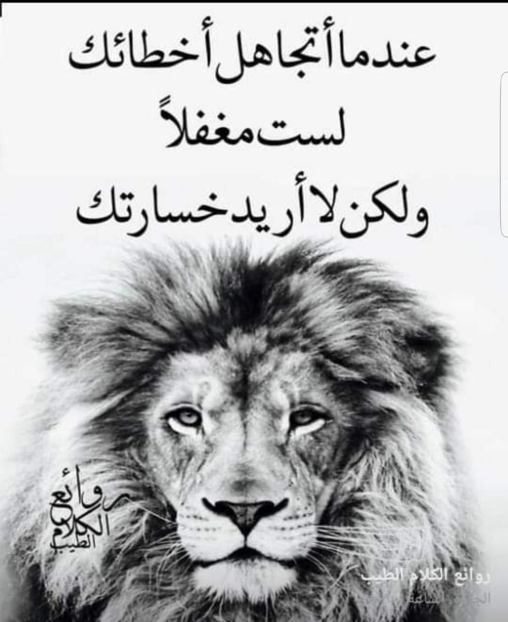 Pin By Nadinekattih On Nado Lion Animals Arabic