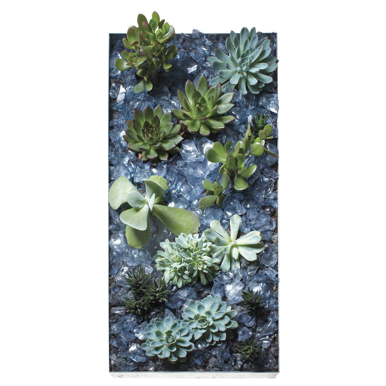Succulent Landscaping, Succulent