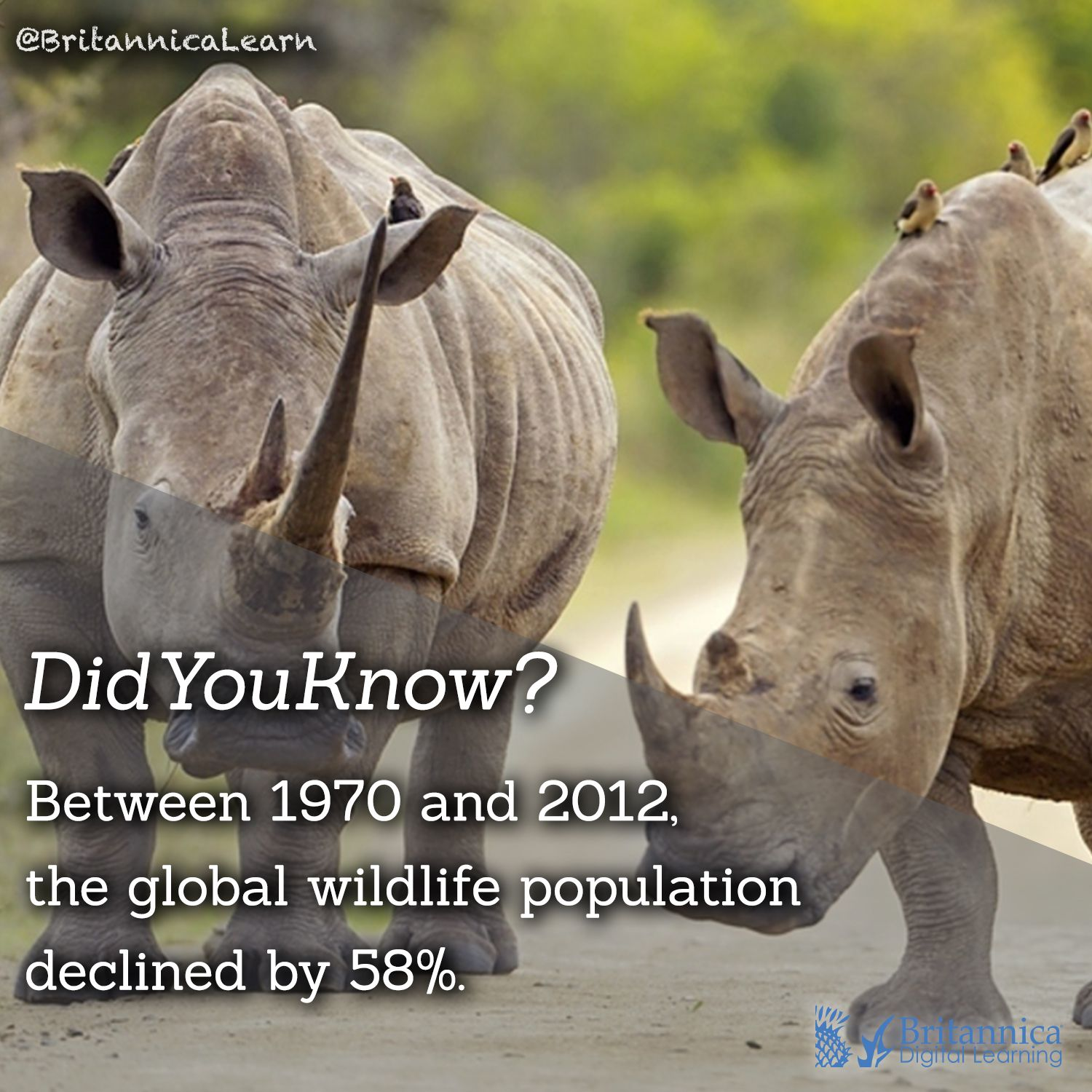 Didyouknow According To World Wildlife Fund S