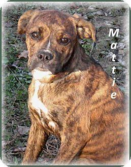 12/15***Marlborough, MA Adorable Dogs Rescue, Boxer