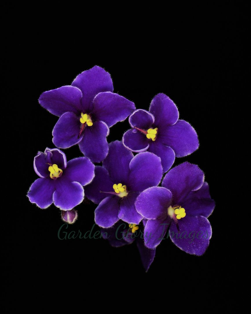 Flower Photo Violets Flower Photo Wall Art Home Decor Etsy Nature Photography Flowers Violet Flower Flowers Photography