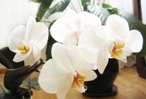 Dona Flor | Na dose certa: cinco dicas facilitam regas das orquídeas no outono - Dona Flor