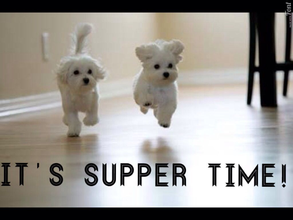 It S Supper Time Cute Baby Animals Cute Animals Baby Animals
