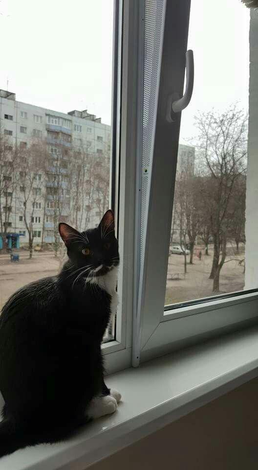Seguridad Para Ventanas Oscilobatientes Cats Windows Animals