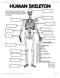Image result for axial skeleton coloring pages Skeletal
