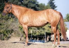 rare horse breeds - Google Search