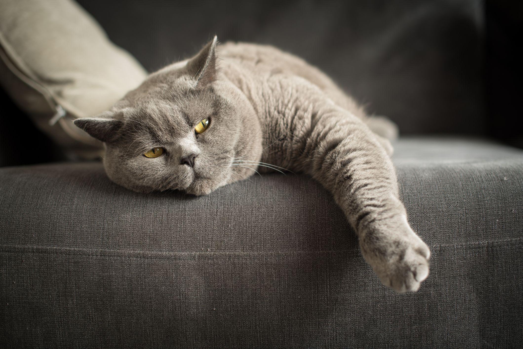 Tak Robia To Absolutnie Swiadomie Zeby To Sprawdzic Zbadano Reakcje 78 Futrzakow Best Cat Breeds Cats Quiet Cat