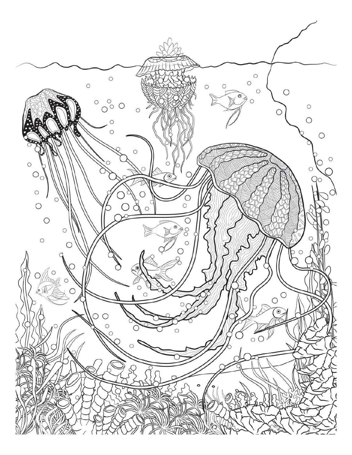Oceana Animal Coloring Pages Colorful Drawings Adult Coloring