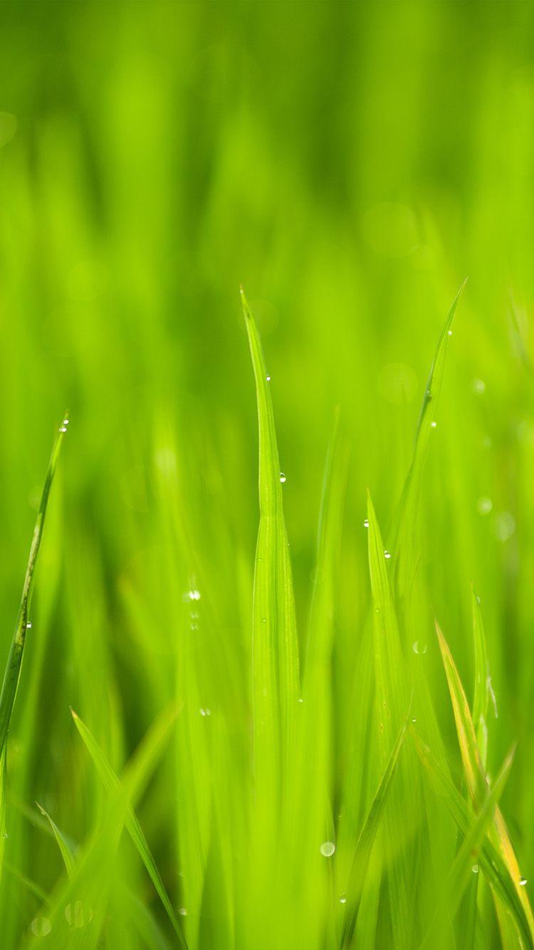 Lawn Flower Rain Bokeh Green Wallpaper Hd Iphone Green