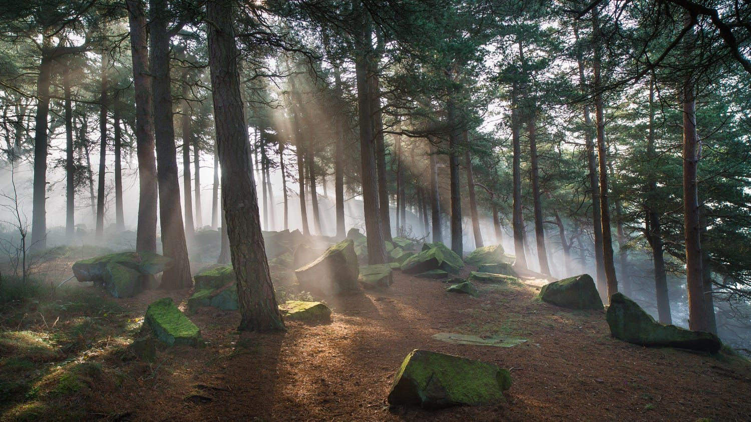 Pinewoods Mist by James Mills on 500px