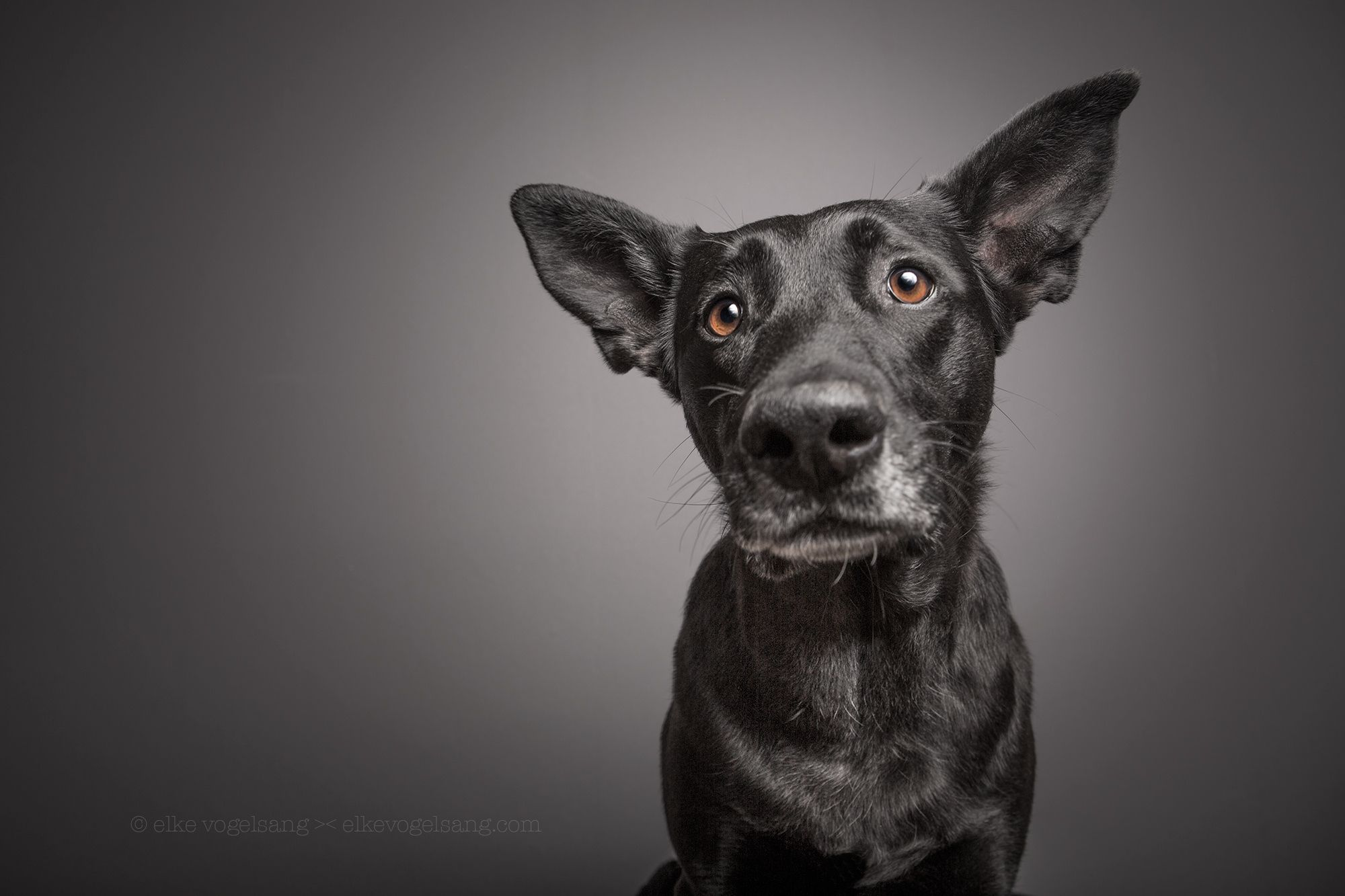 And they say that animals got no soul by Elke Vogelsang on
