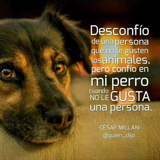 Confianzadesconfianza Frases Perros Y Mascotas