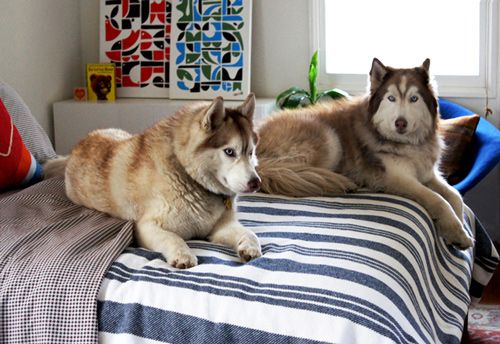 Sneak Peek Husky Ranch Siberian Huskies Dog And Animal