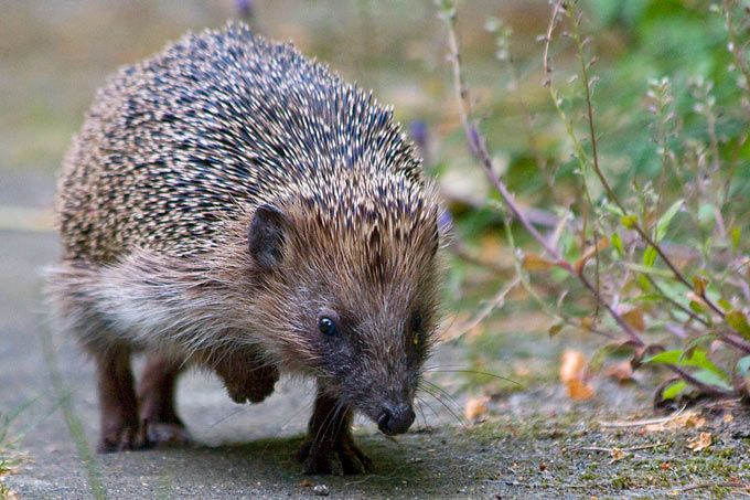 Popular  ideas about Igel F ttern on Pinterest Country life berwintern and Freuen