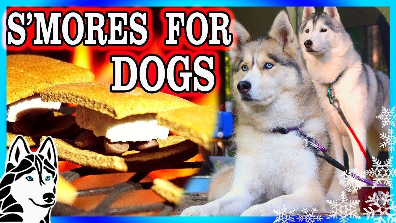Diy S Mores For Dogs Diy Dog Treats Snow Dogs Snacks 81 Diy