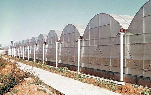 Greenhouse Hidroponik Multispan Atau Campuran Tanaman