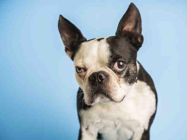 Pet Details Arizona Humane Society Dog Adoption Humane