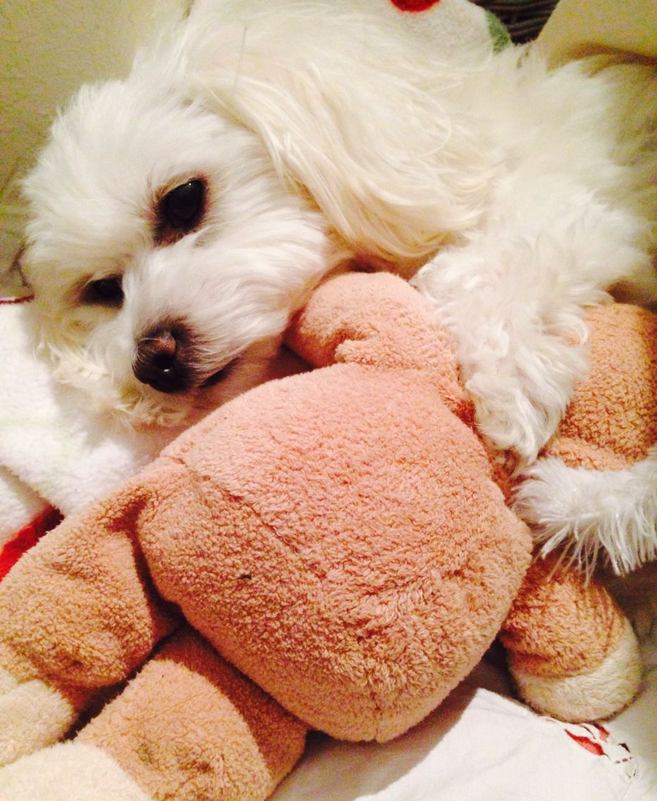Nelly ( Maltese ) and her best friend!!