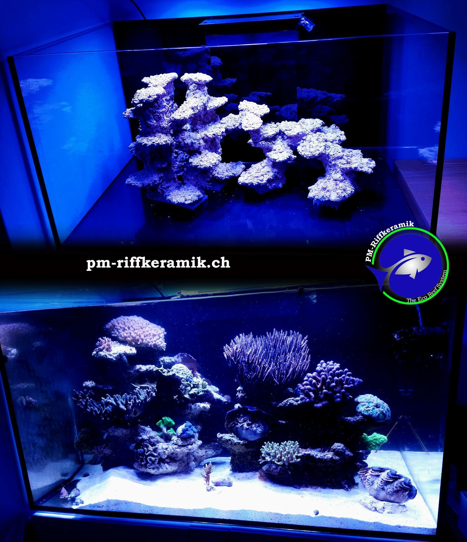 PM Reef Ceramic Aquarium Pinterest