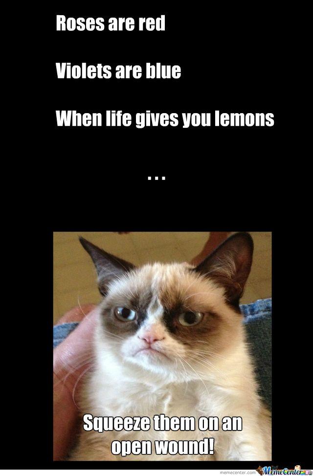 Grumpy But Cute Grumpy Cat Funny Grumpy Cat Memes Grumpy Cat Humor
