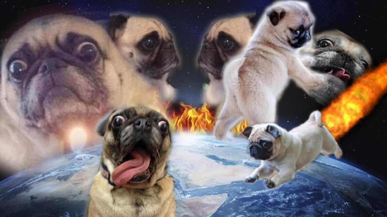 This Has Been My Desktop Background For Years Https Ift Tt 2pwcakl Cute Backgrounds Cute Animals Meme Background