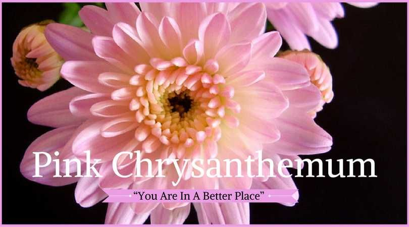 10 best funeral flowers pinterest funeral flowers funeral flower meanings pink chrysanthemum meaning pink chrysanthemums are appropriate funeral flowers especially for asian cultures mightylinksfo