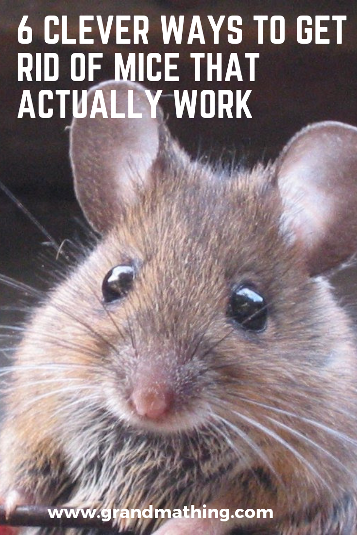 6 Clever Ways To Get Rid Of Mice That Actually Work Getting Rid Of Mice Mice Repellent Repellent Diy