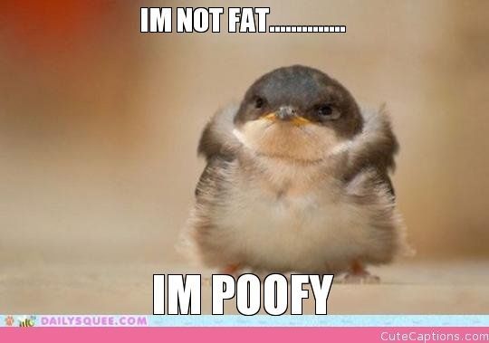 Im Not Fat………….., Im Poofy |