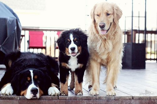 Clares Dogs Via The Taste Of Sunshine Business Ethics
