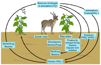 how to draw the nitrogen cycle step by step