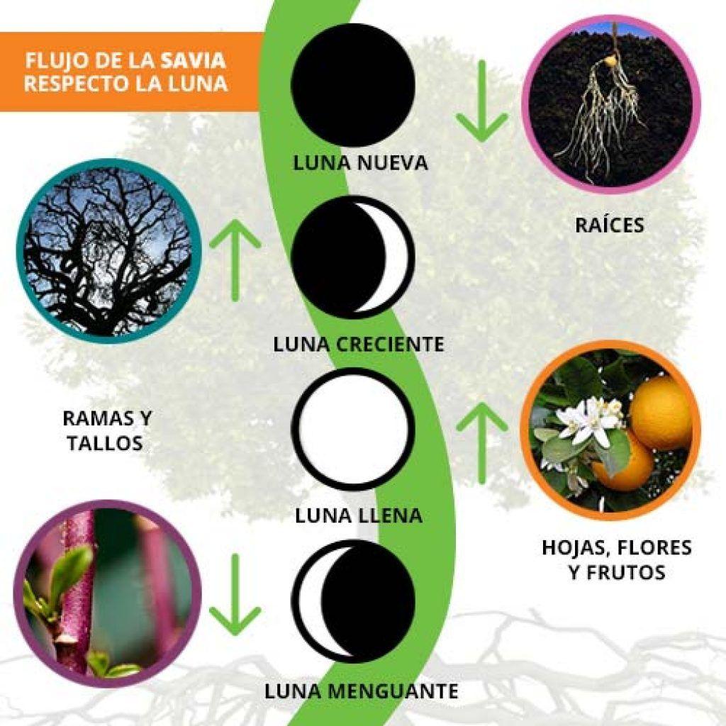 El Calendario De Siembra Es Una Planeación De Tu Huerto Urbano Considerando 4 Factores Fundamentales Que Expl Siembras Cultivo De Hortalizas Cultivo De Plantas