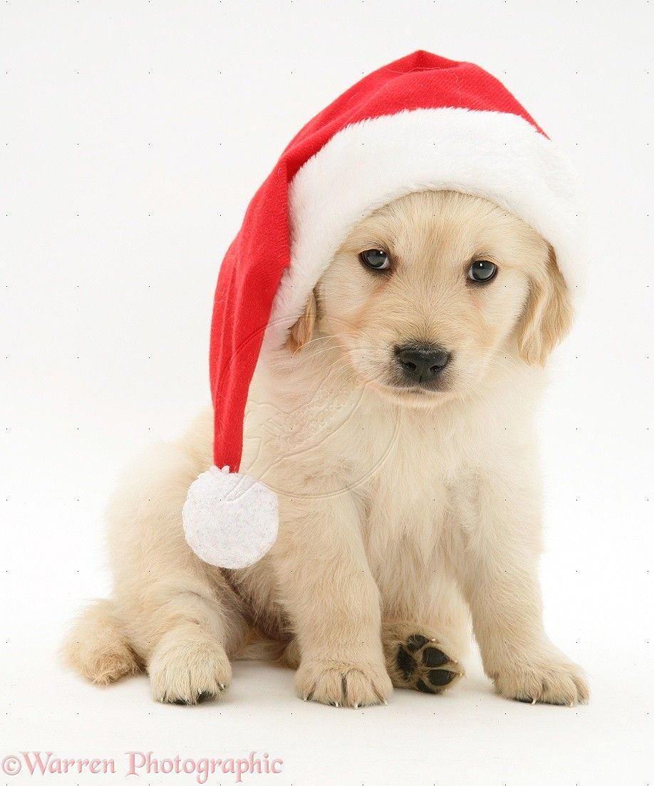 Pin By Kelly T On Christmas Animals Christmas Puppy