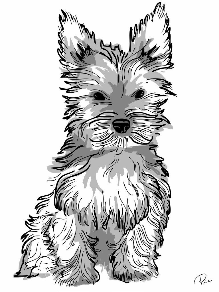 Yorkie Puppy Drawing At Getdrawings Com Dog Coloring Page Dog Coloring Book Puppy Coloring Pages